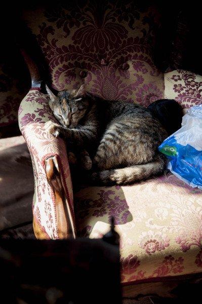 gatto della sposa